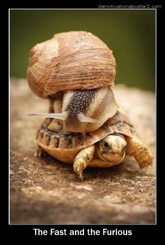 fast furious turtle snail