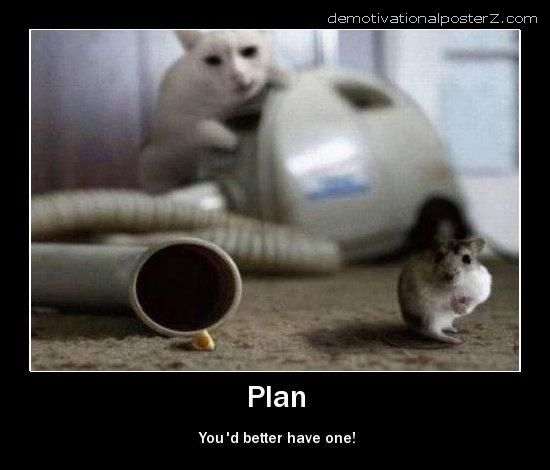 plan you'd better have one cat
