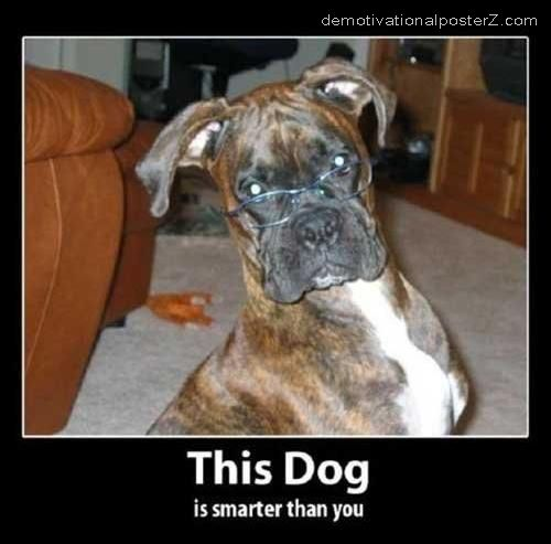 THIS DOG IS SMARTER THAN YOU