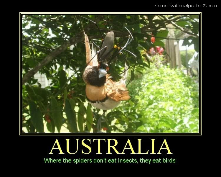 AUSTRALIA SPIDERS EAT BIRDS