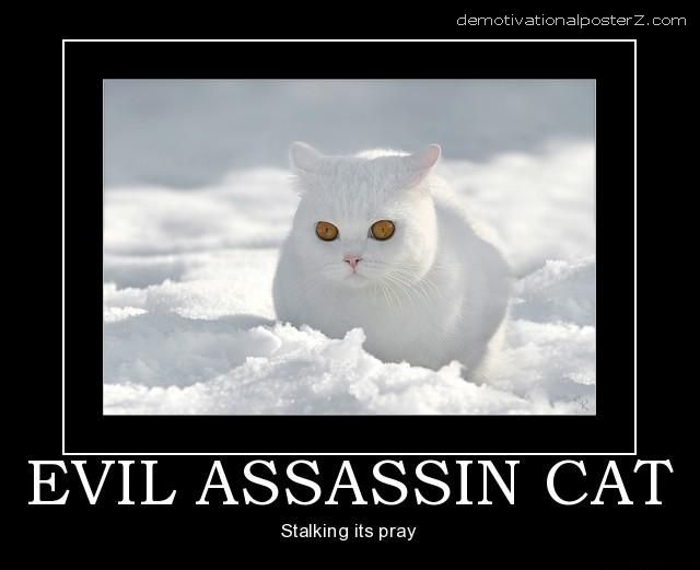 EVIL white ASSASSIN CAT MOTIVATIONAL