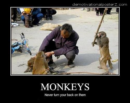 don't turn your back on monkeys