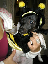 Mila as a Bumble Bee