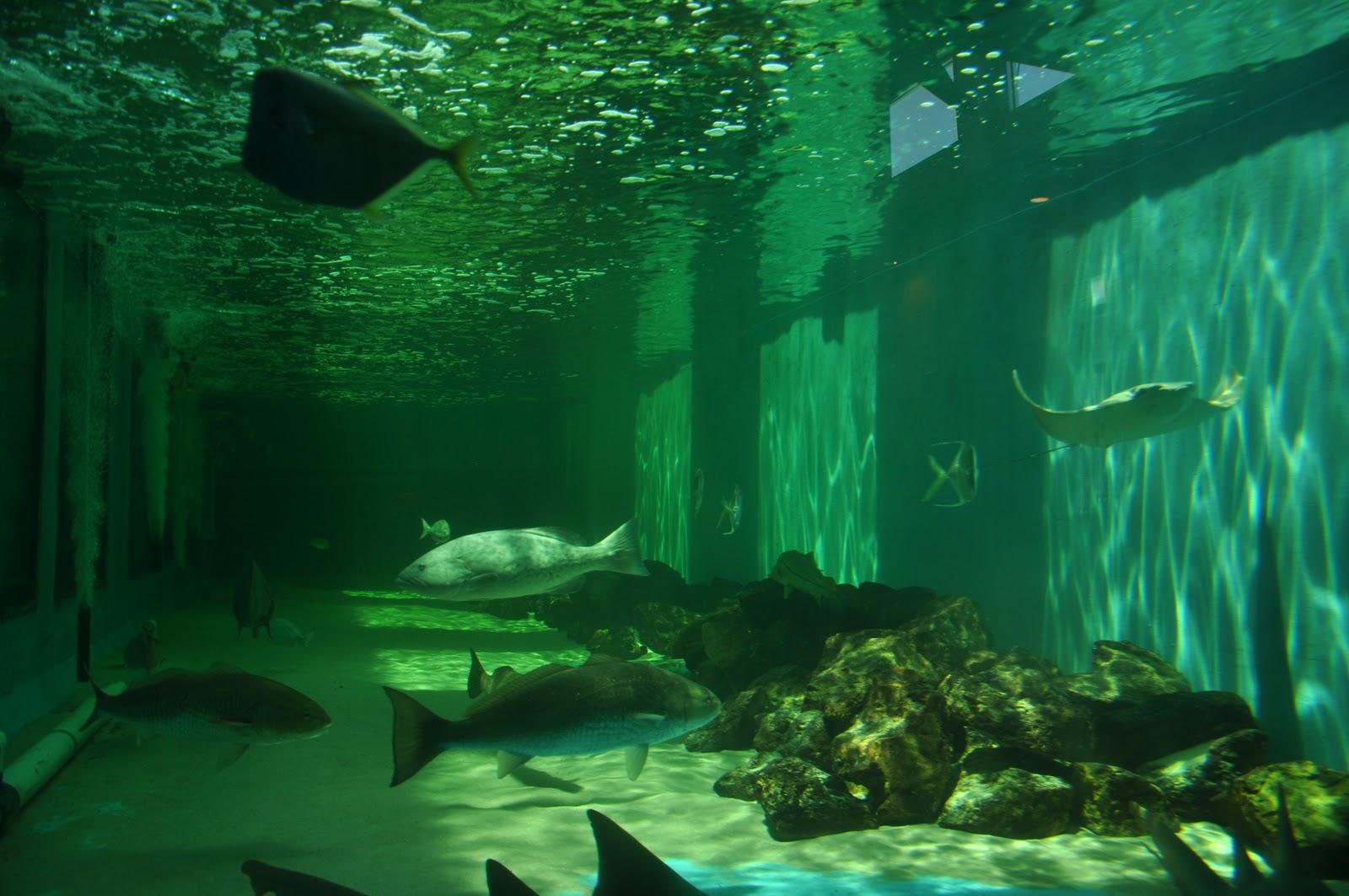 Magnum Arts Clearwater Marine Aquarium
