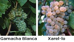 Uvas+Nerola+Blanco.bmp
