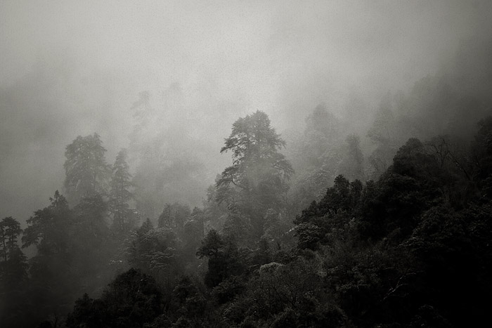 Cloud forest near Doban