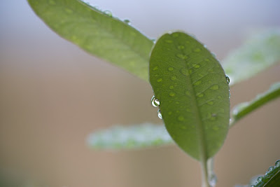 Leaf and droplets