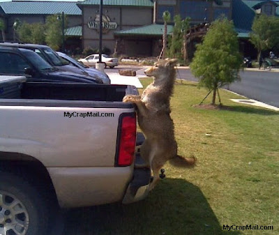 Stop! Your dog is falling off the truck!