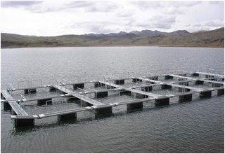 Emprendimiento en maricultura cultivo de peces en jaulas for Jaulas flotantes para piscicultura