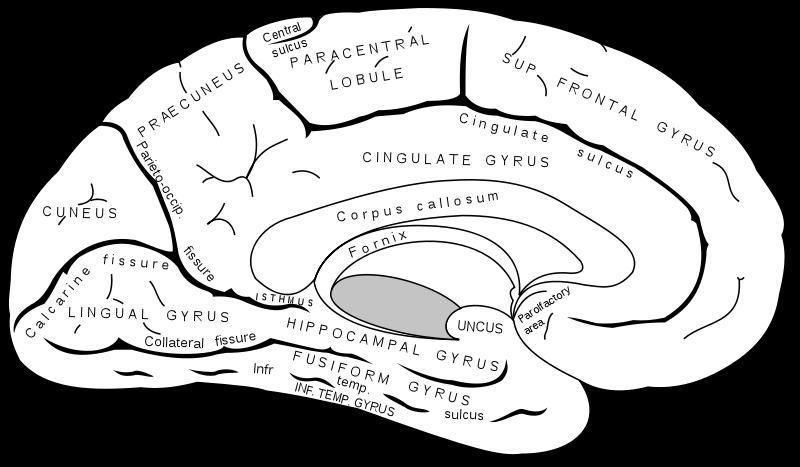 Human Skeleton Diagram Human Eye Diagram Quiz