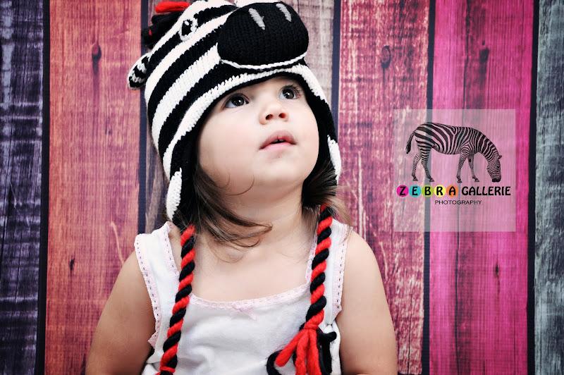 Zebra Gallerie