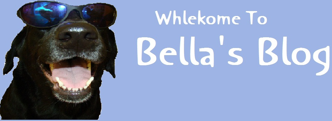 Bella's Blog