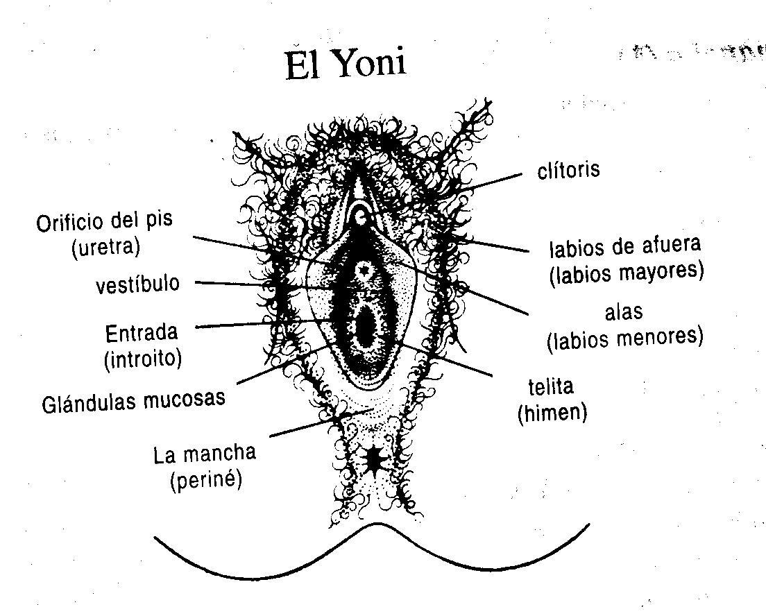 Fotos De Clitoris Gordas Imagenes S