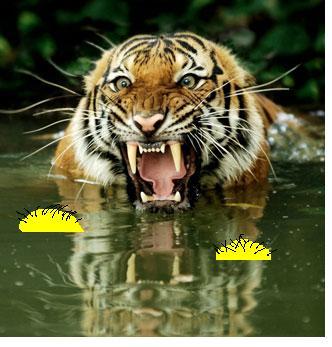 [balls+tiger+in+water.JPG]