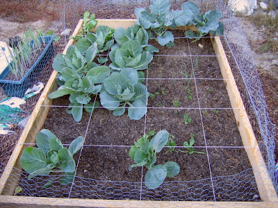 Garden Update Oct 2008 - 2nd Raised Bed