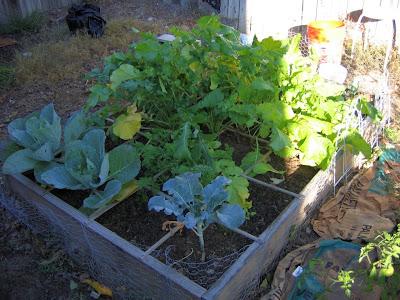 Garden Update 2008 - 1st raised bed