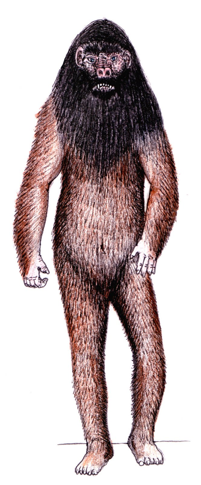 Orang pendek, based upon eyewitness descriptions (Tim Morris)