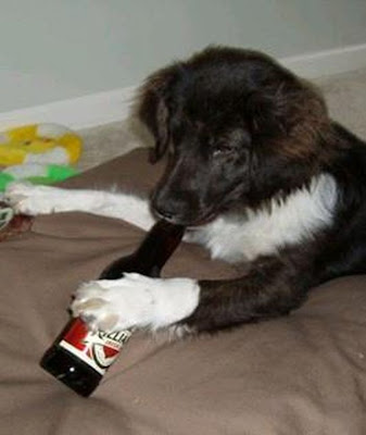 Alcohol And Pets 25 Pics Curious Funny Photos Pictures