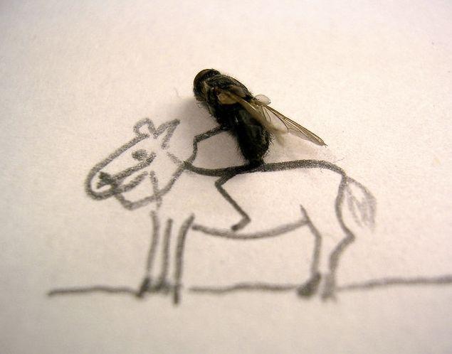 [dead-fly-art-14.jpg]