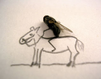 Finding Dead Flies In House http://curiousphotos.blogspot.com/2009/10/creative-art-in-fly-dead-body-15-pics.html