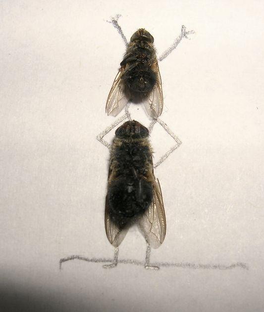 [dead-fly-art-02.jpg]