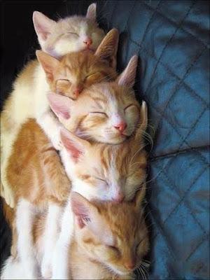 Komik kedi Foto - 50 Resimler