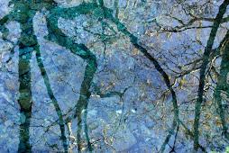 Το καθρέπτισμά τους στα νερά της Έρκυνας