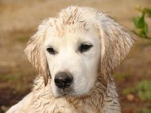 Muddy Boy!
