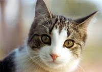 Fakta Unik dan Menarik Tentang Kucing