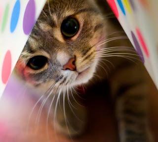Fakta Unik Tentang Kucing.alamindah121.blogspot.com