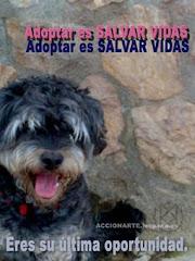 Adoptar es SALVAR VIDAS.