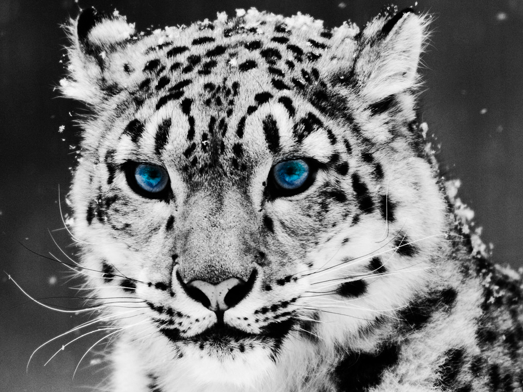 white lepard