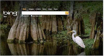 Bing Wallpaper Egret