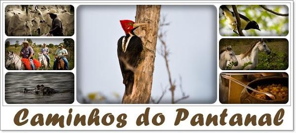 Caminhos do Pantanal