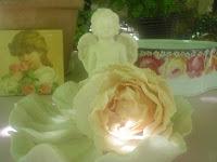 Roses à commander