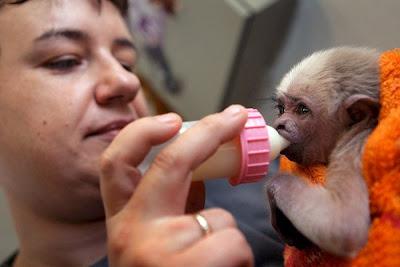 Mono gibón