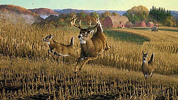first round whitetail deer
