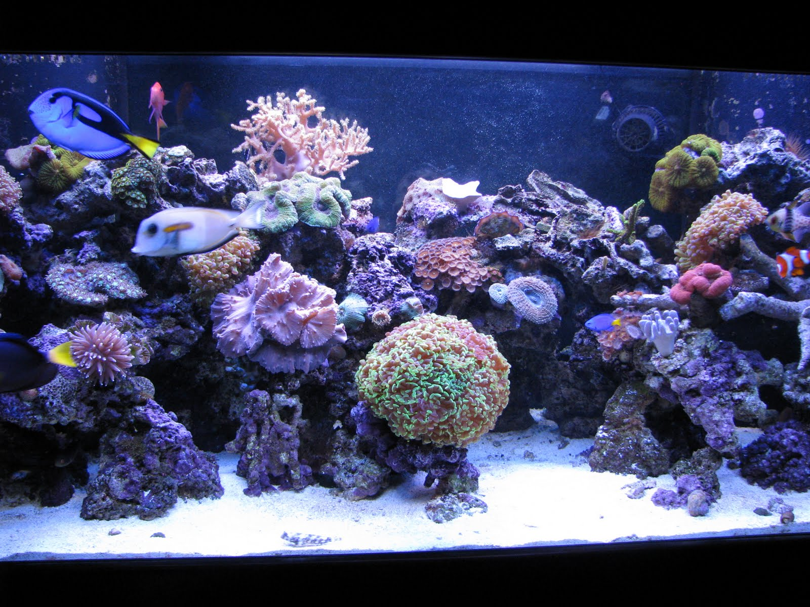 New wave aquaria my reef aquarium for Reef tank fish