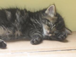 http://2.bp.blogspot.com/_b7RuVhjrsvM/TBEUgPuemVI/AAAAAAAAAFQ/6XWN4hCnW4c/s320/sleeping+kitten.JPG