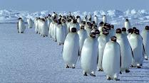 Monogami Pinguin