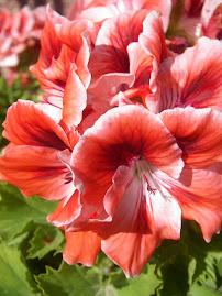 Flores del jardín.