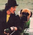 Butkus Rocky Dog