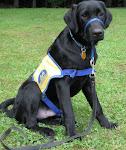 CCI Puppy #1 Dembre
