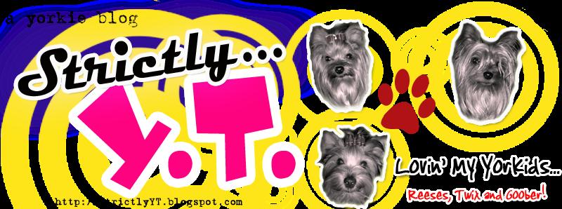 Yorky Blog