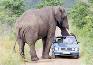 Safari en africa. Lugares Sorprendentes. Turismo internacional. Viajes por el mundo