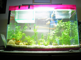 Meu aquário