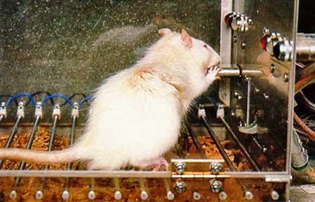 Lipton arrête les tests sur animaux