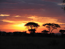Tanzania 1.3: The Serengeti, October, 2006