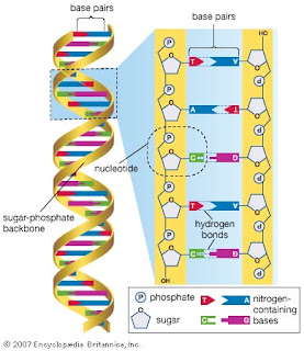 Genetic+Cloning: The Human Genome Project.