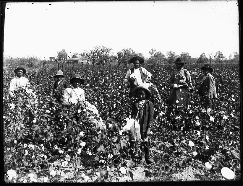 southern cotton and slave industry The cotton industry was  the number of southern cotton bales  the federal government was forced to confront the question of what to do with slave.